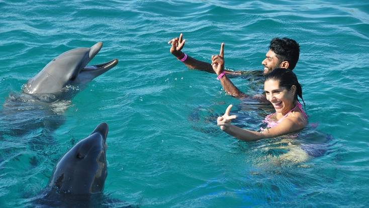 Always keep your distance when swimming with dolphins in the wild