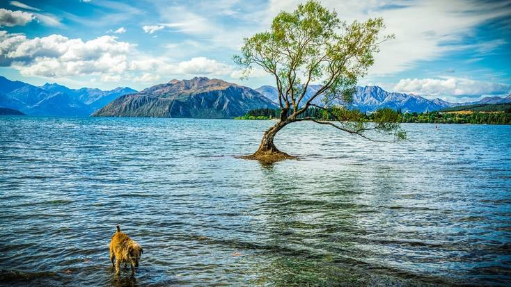 See that Wanaka tree for yourself in 2020