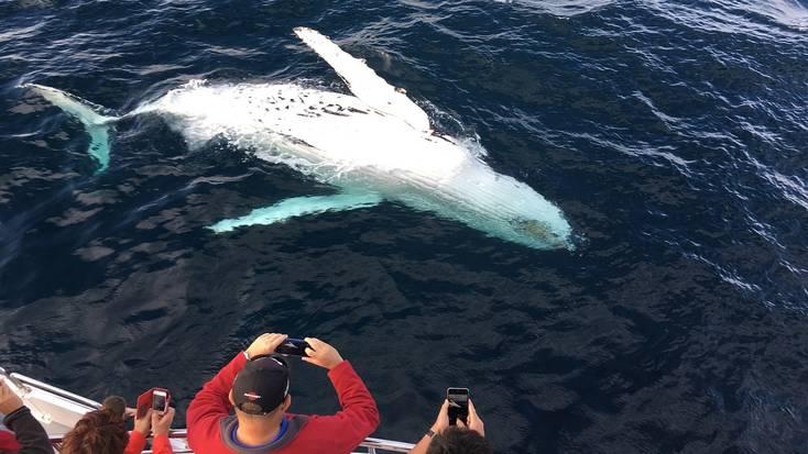 Whale watching near Gold Coast