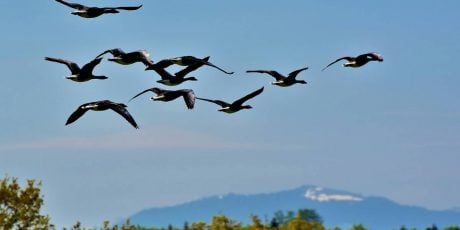 Best Places to go Bird Watching for the Fall Migration