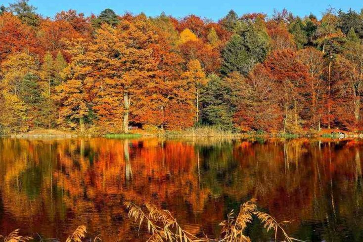 view from lakeside of fall foliage