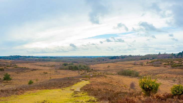 Plan family holidays in the New Forest