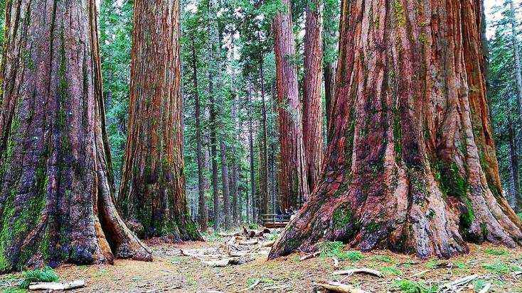 Explore the Sequoia National Forest