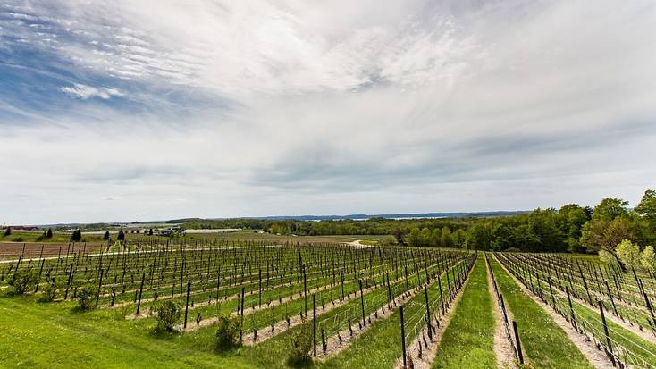 Visit a Traverse City winery
