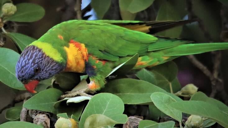Discover the Australian wildlife on World Vegan Day