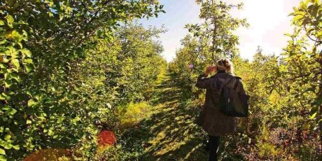 Apple Picking in New England for Fall 2020