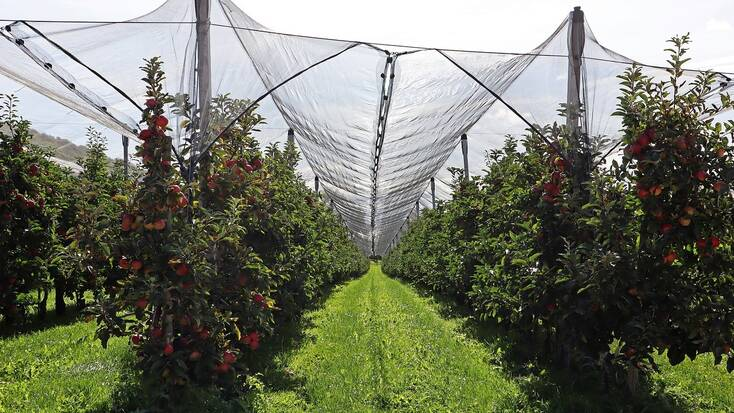 Visit an apple picking Orchard