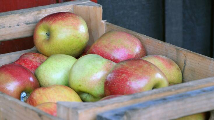 store apples in a cool dry place
