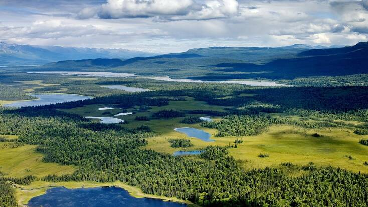 A birds eye view over the forests and lakes in Denali National Park