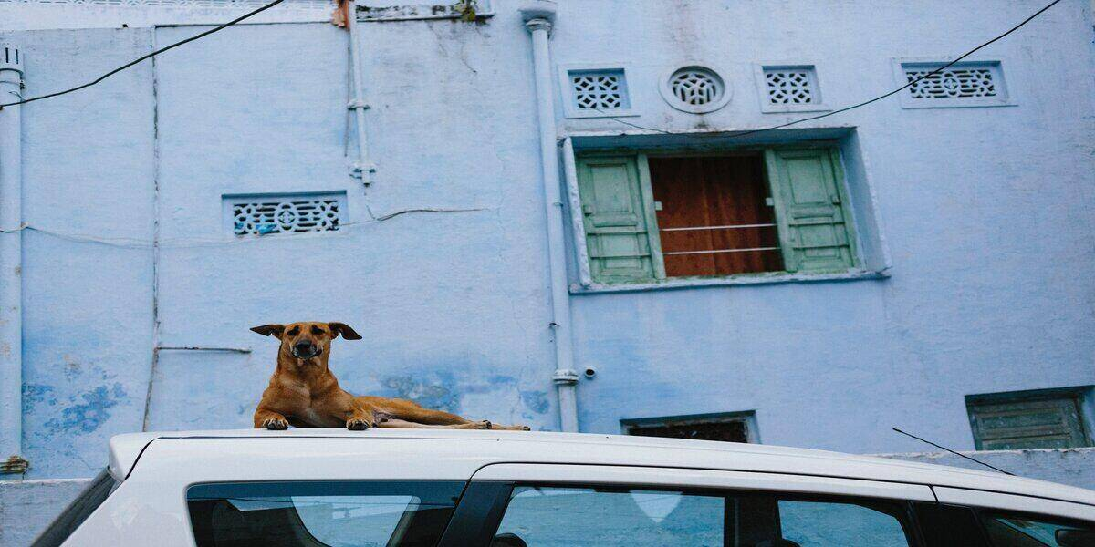 dog sitting on top of car