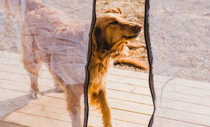 happy dog enjoying family vacation in the U.S.