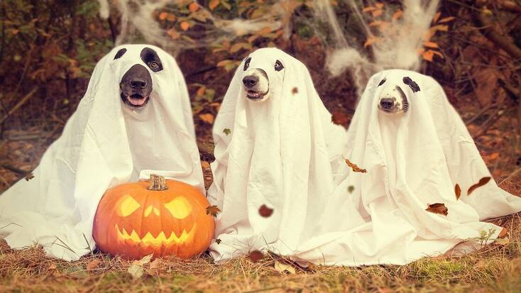 Three dogs with a Jack o Lantern