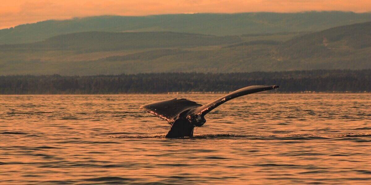 sightings of orca in the water during the best travel getaways for adventurers