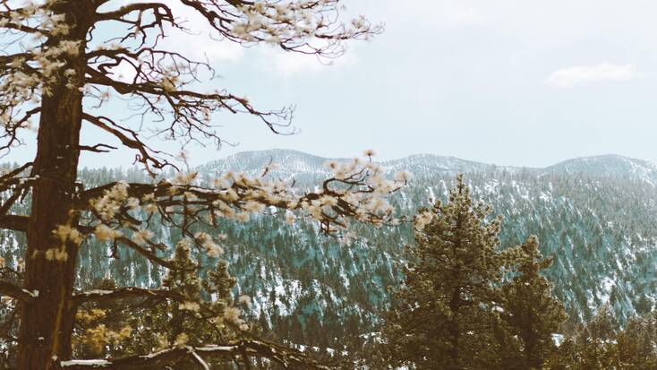 The mountains near Big Bear Lake, one of the best places to go in December