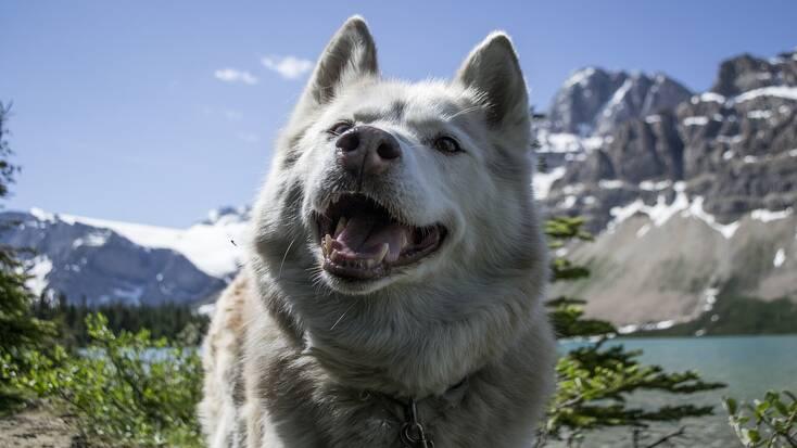 A dog-friendly vacation in Banff