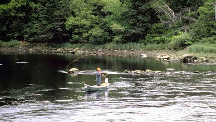 Someone fishing in a river in Blackwater Falls, WV