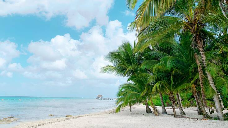 A beach with palm trees in Cozumel, Mexico