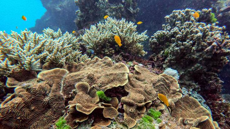 Explore the Great Barrier Reef on Australia Day
