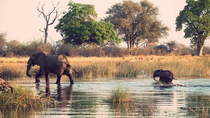 Elephants crossing a river in Kenya
