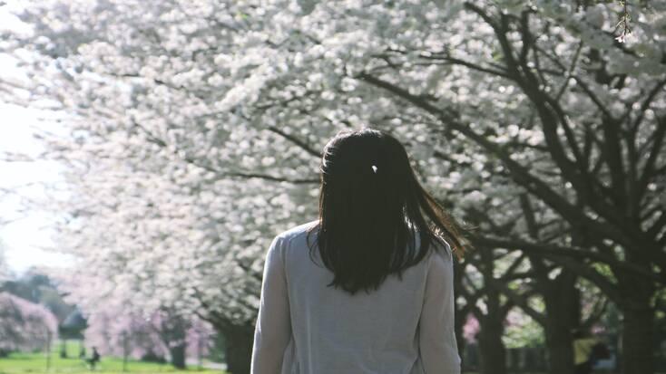 Cherry blossom in Fairmount Park