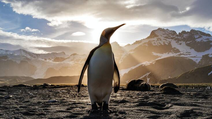 A penguin in a winter vacation spot