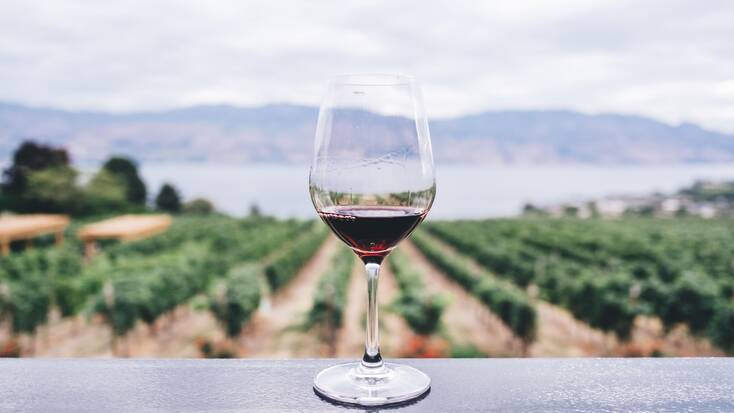 Visit a winery and learn about viticulture