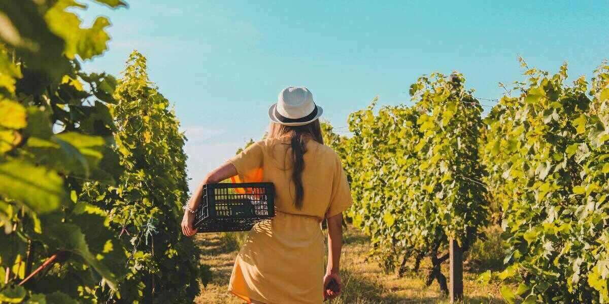 Celebrate National Drink Wine Day, 2021