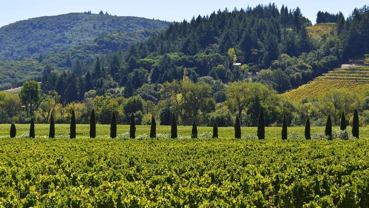 Plan a girls' getaway to the Sonoma Valley