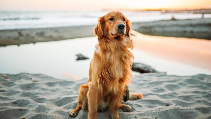 A dog on a beach