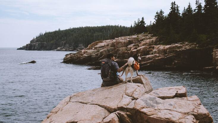 A dog and their human enjoying views of the water while hiking in Acadia National Park, Maine