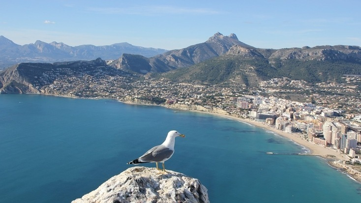 A seagull overlooking one of the beaches in Alicante.