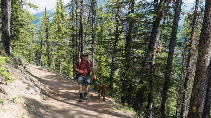 A hiker and his dog enjoying forest-cvered dog-friendly hiking trails in Banff, Alberta