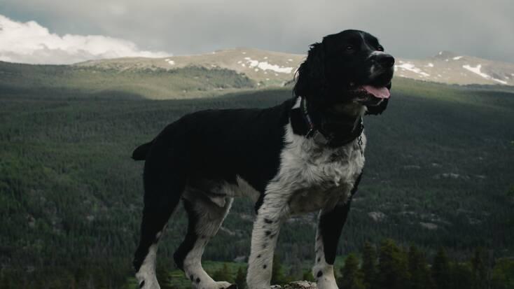 A doggo taking a breather during some dog-friendly hiking near Boulder, Colorado