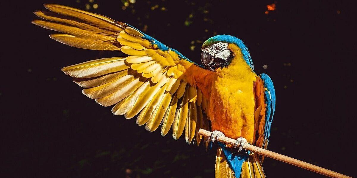 A macaw parrot, one of many exotic birds to see in the wild on World Birding Day