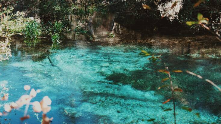 Stunning turquoise waters of the Ichetucknee Springs