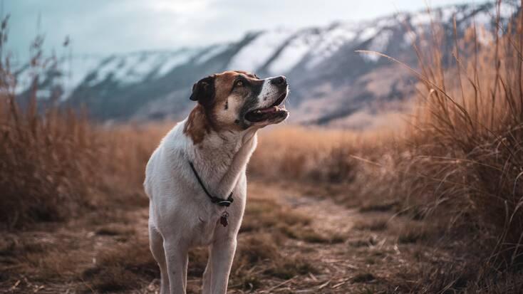 A dog exploring his favorite Oregon hiking trails