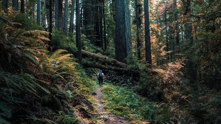 Someone hiking through Redwoods State Parks
