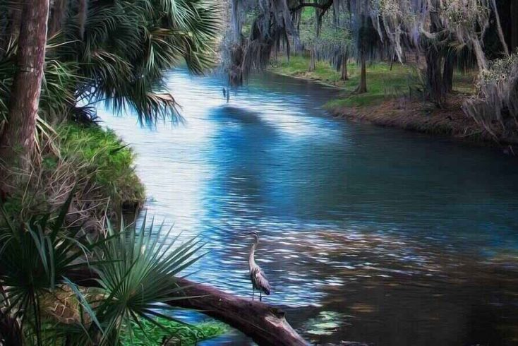 Best springs in Florida