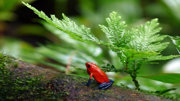 When you visit a rainforest, this frog and more is waiting at Costa Rica destinations