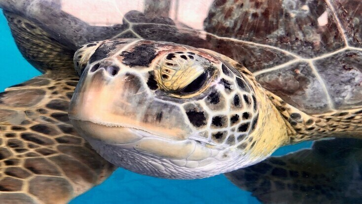 We can avoid sea turtle extinction together