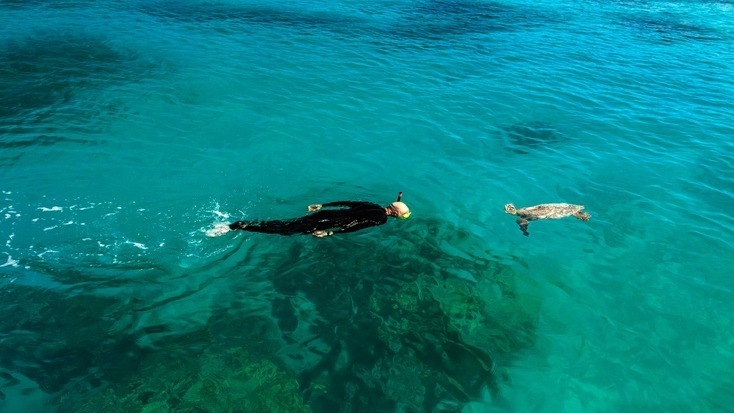 Swimming with green sea turtles is easy