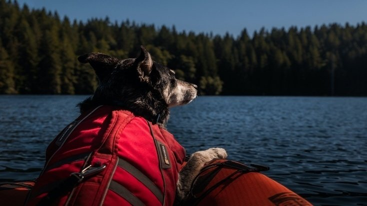 A pensive pooch with someone going canoeing with a dog