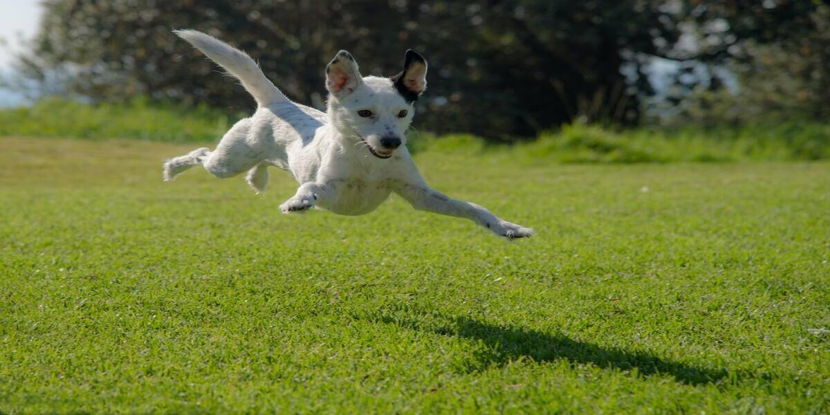 An animal jumping at the best dog friendly glamping site