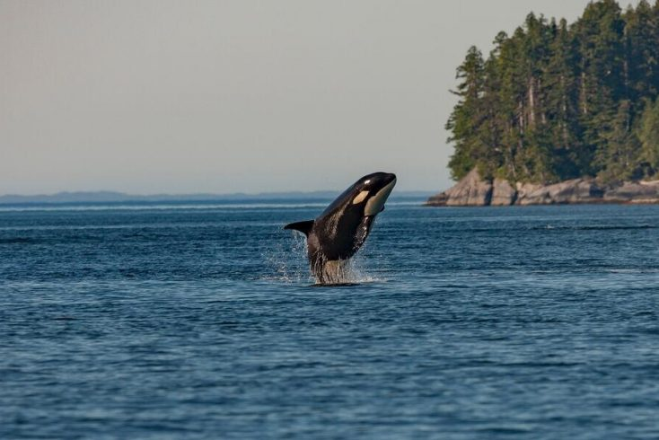 Discover the best places to see Orcas for this years World Orca Day!