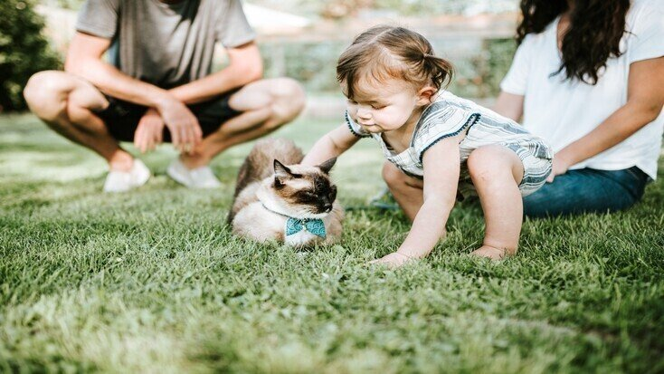 A girl petting a cat during the best glamping with pets
