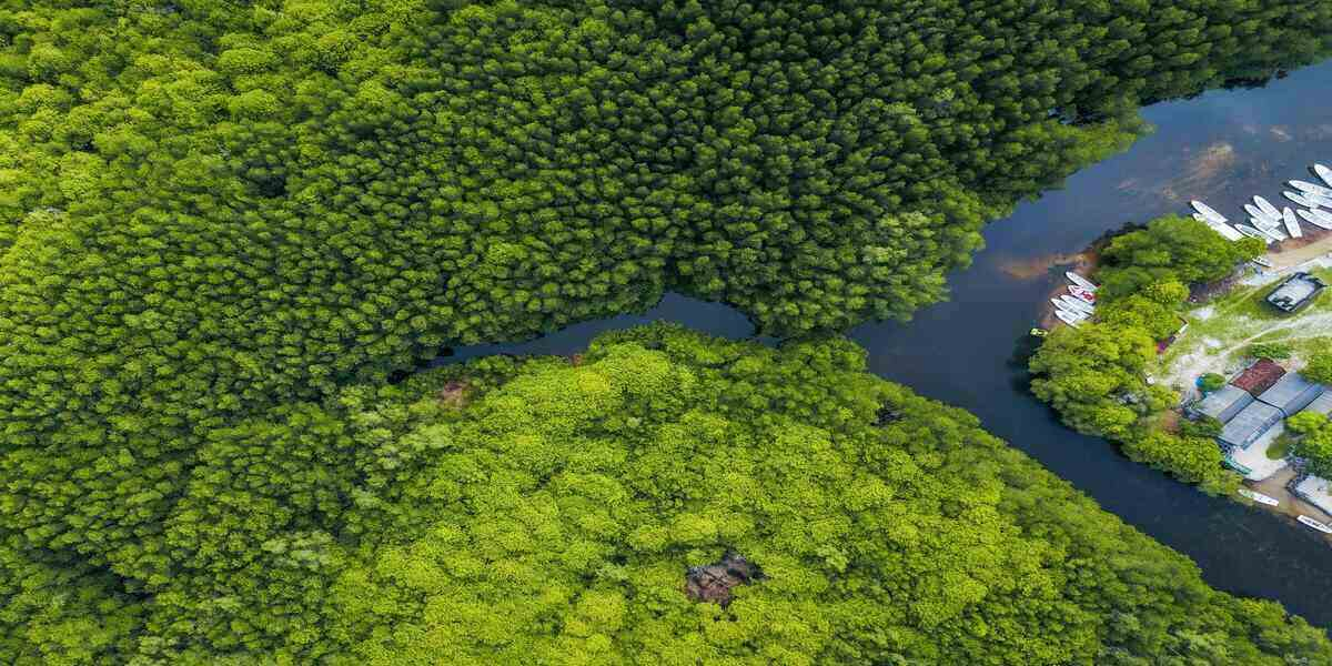 Mangrove forests - one of the many ecosystems around the world