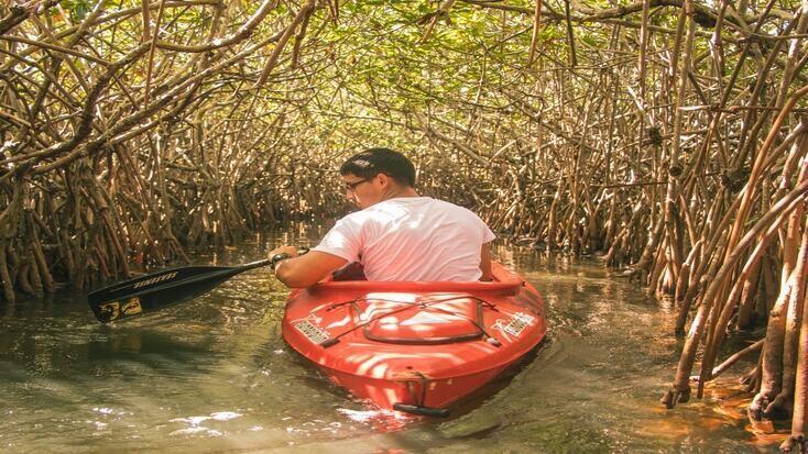 A man canoeing through Mangroves in Vietnam
