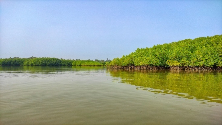 The Sundarbans Mangrove Forest in India