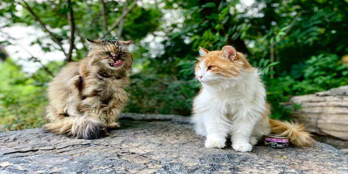 Two cats seen during vacations around the world